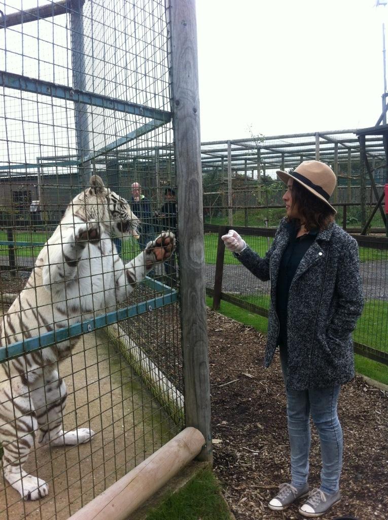 Tiger fist bump!