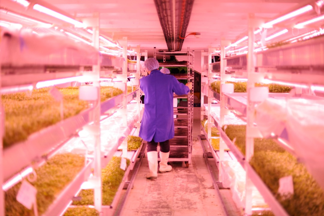 New sustainable salads grown underground will hit the shelves in M&S this week