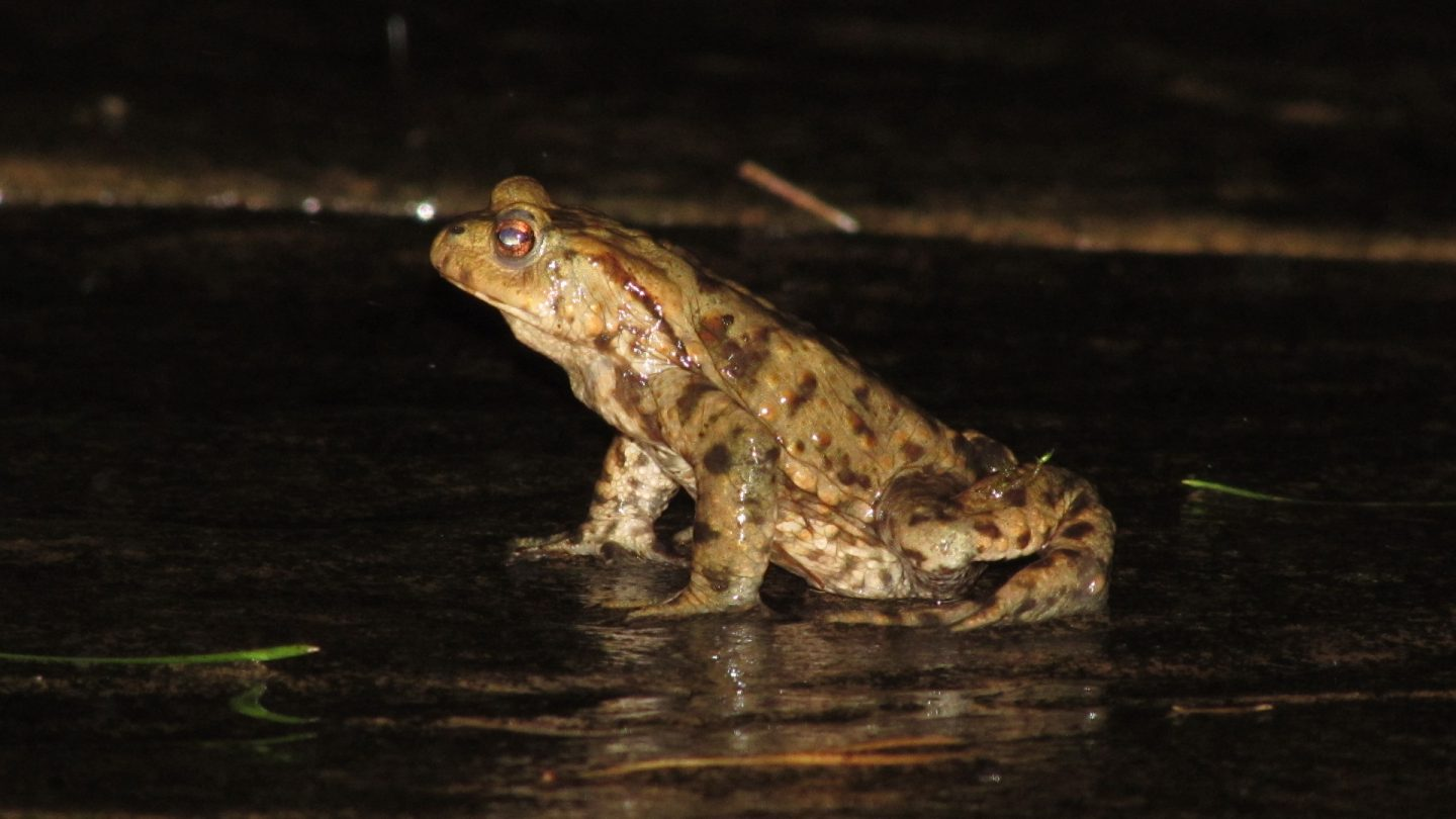 A toad on the patio